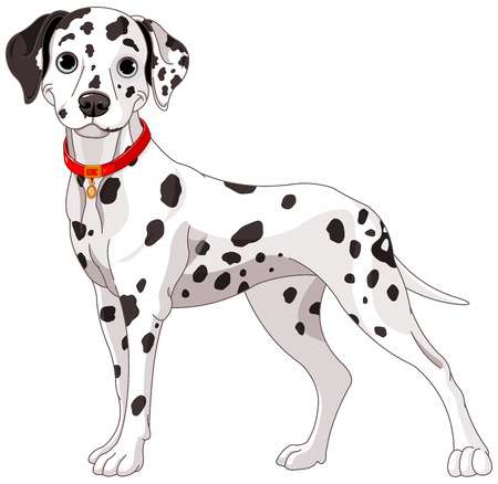 3,114 Dalmatian Stock Vector Illustration And Royalty Free Dalmatian.