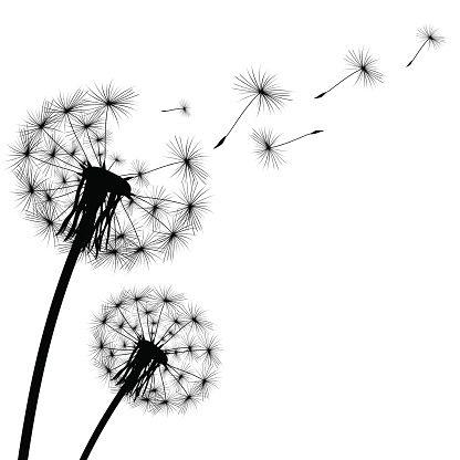 Dandelion Illustrations & Vector Images in 2019.