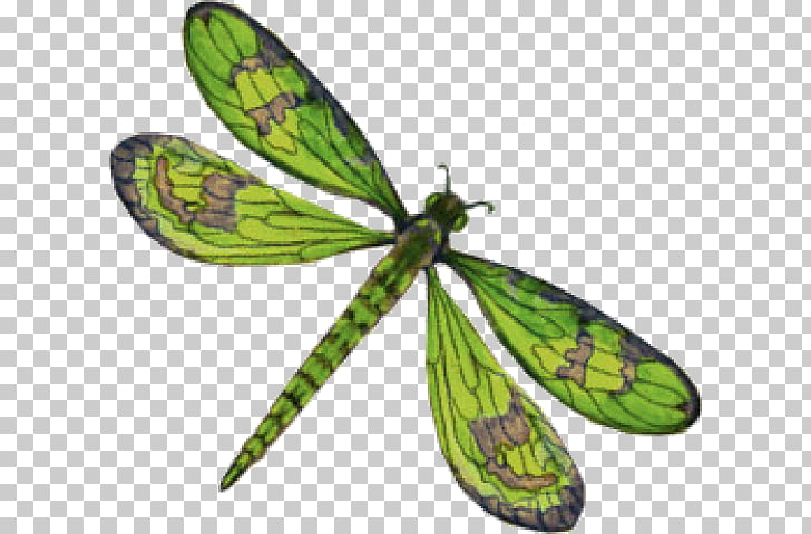 Dragonfly , dragonfly PNG clipart.