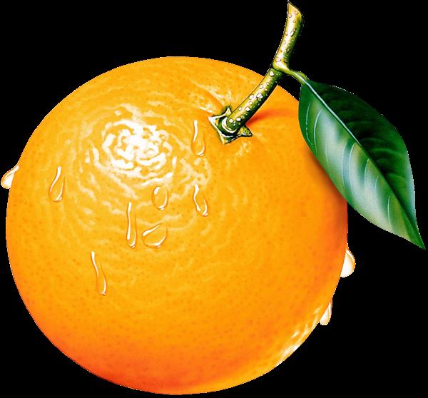 Orange Clipart Picture.