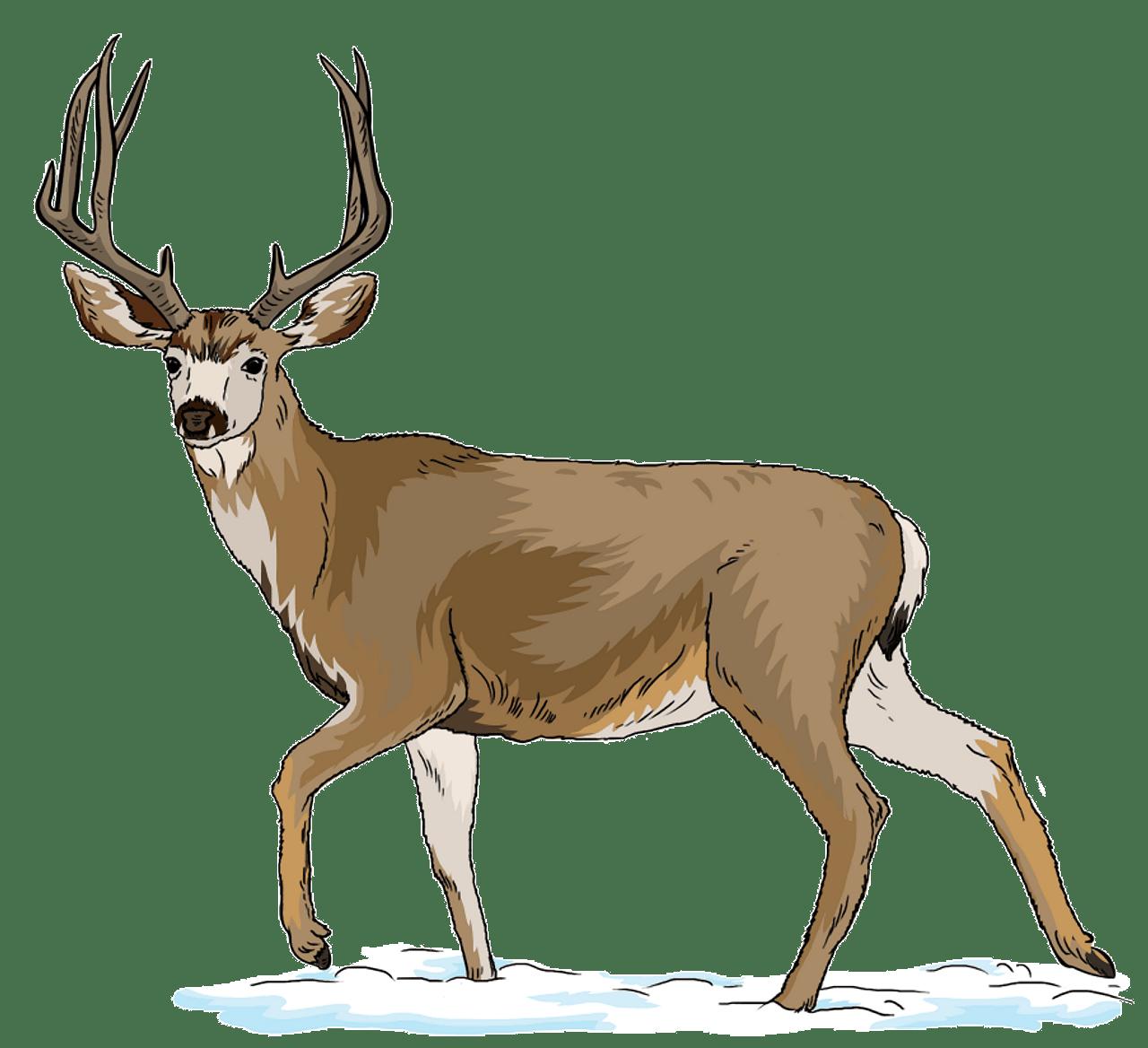 Mule Deer clipart. Free download..