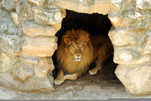 Lions Den Clipart.
