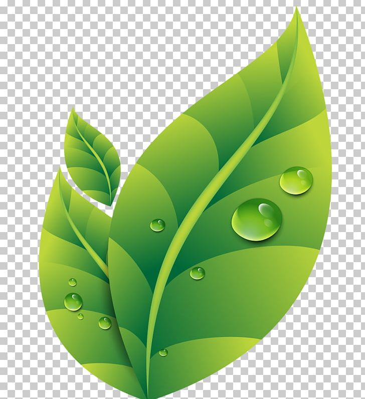 Dew Drop Leaf PNG, Clipart, Background Green, Computer.