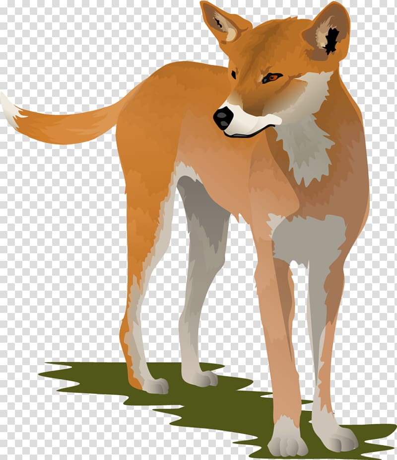 Dingo Dog , Dingo transparent background PNG clipart.