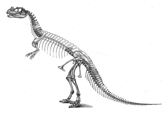 Black & White Clipart Dinosaur Bones Clipart Gallery ~ Free.