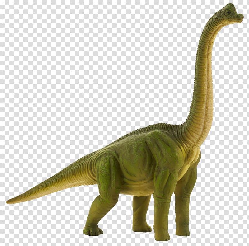 Tyrannosaurus Brachiosaurus Diplodocus Apatosaurus Dinosaur.
