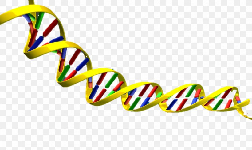 DNA Nucleic Acid Double Helix Clip Art, PNG, 1506x901px, Dna.