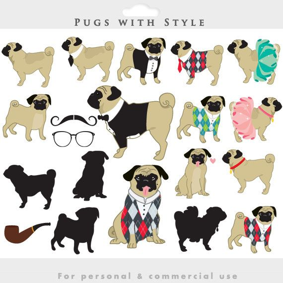 1000+ images about Pugs on Pinterest.