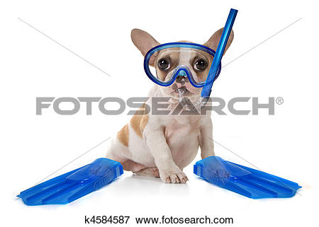 Picture of Puppy Dog With Swimming Snorkeling Gear k4584587.