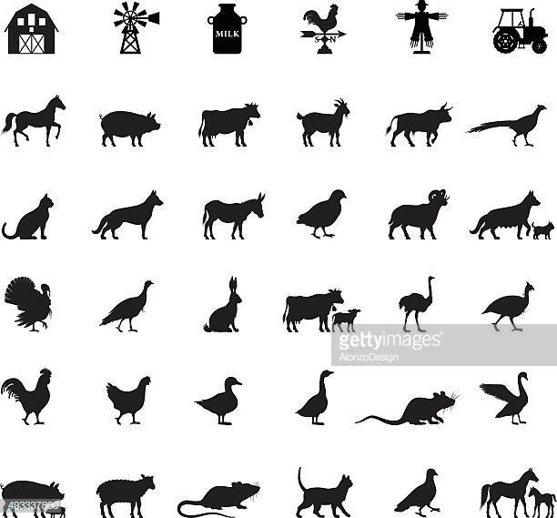 60 Top Domestic Animals Stock Illustrations, Clip art, Cartoons.