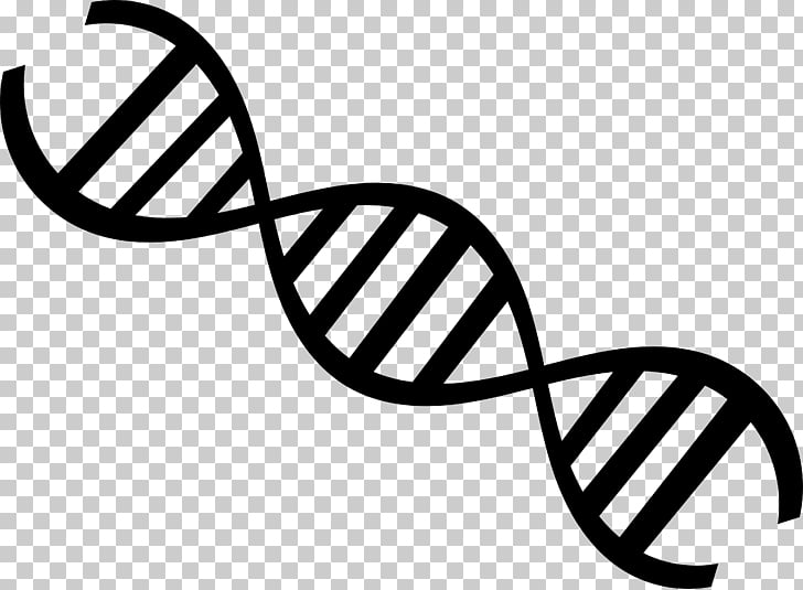 DNA Nucleic acid double helix Genetics , others PNG clipart.