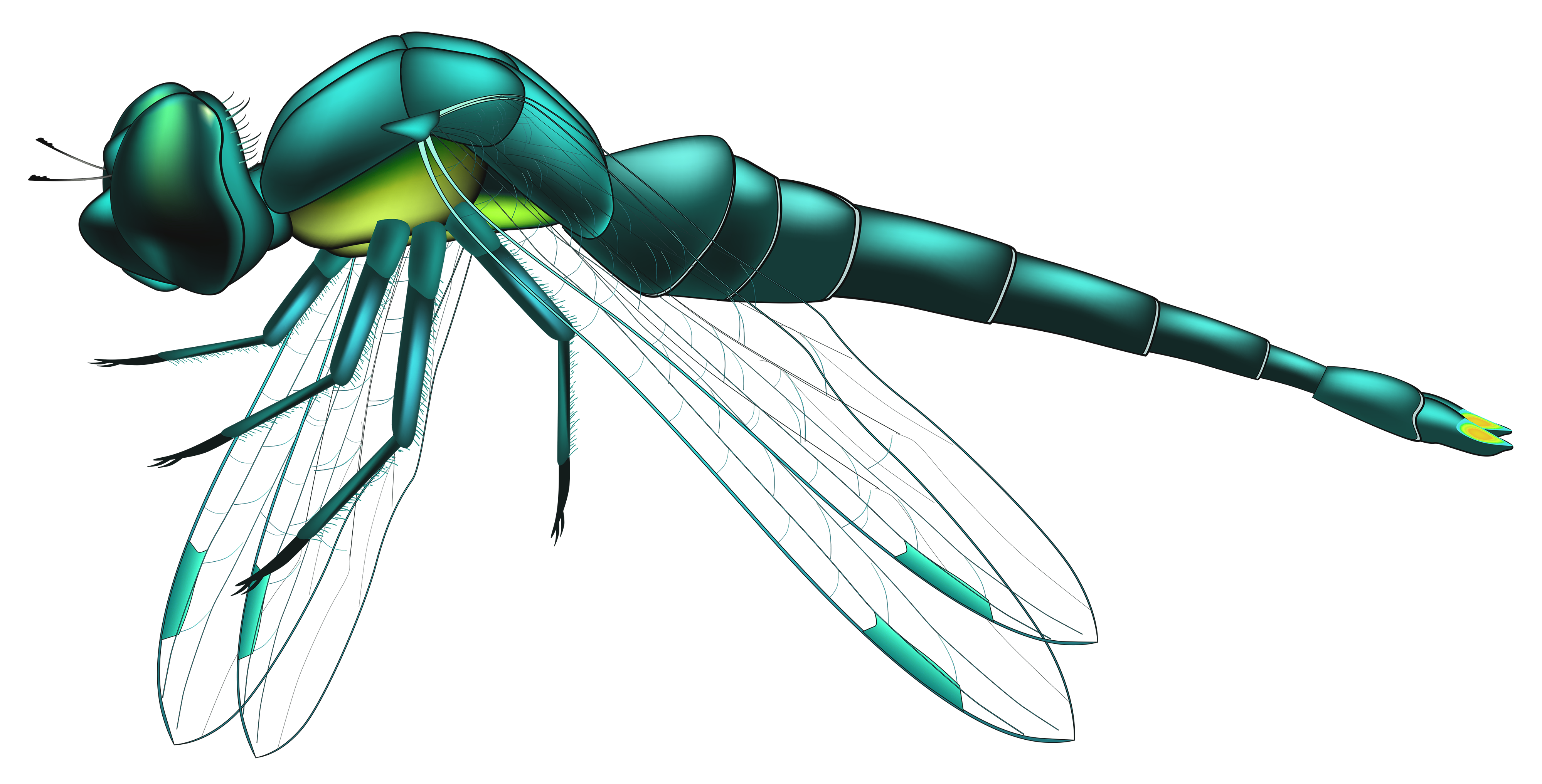 Dragonfly Blue PNG Clip Art.