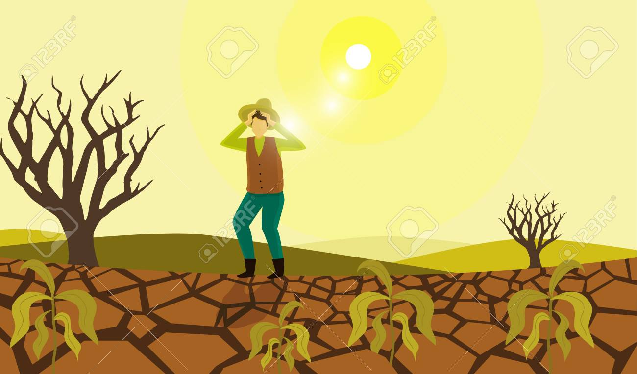 Farmer suffering drought damage.
