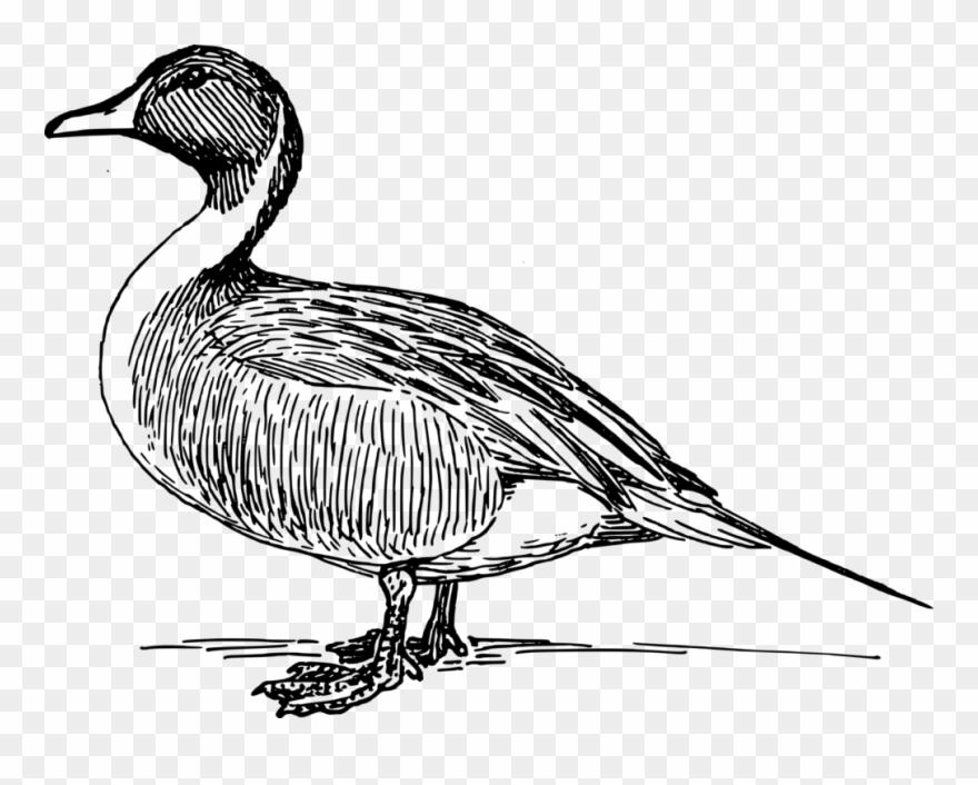 Rubber Duck Clip Art.