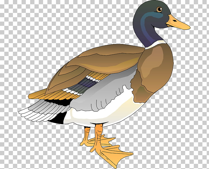 Duck Free content , Clker s PNG clipart.