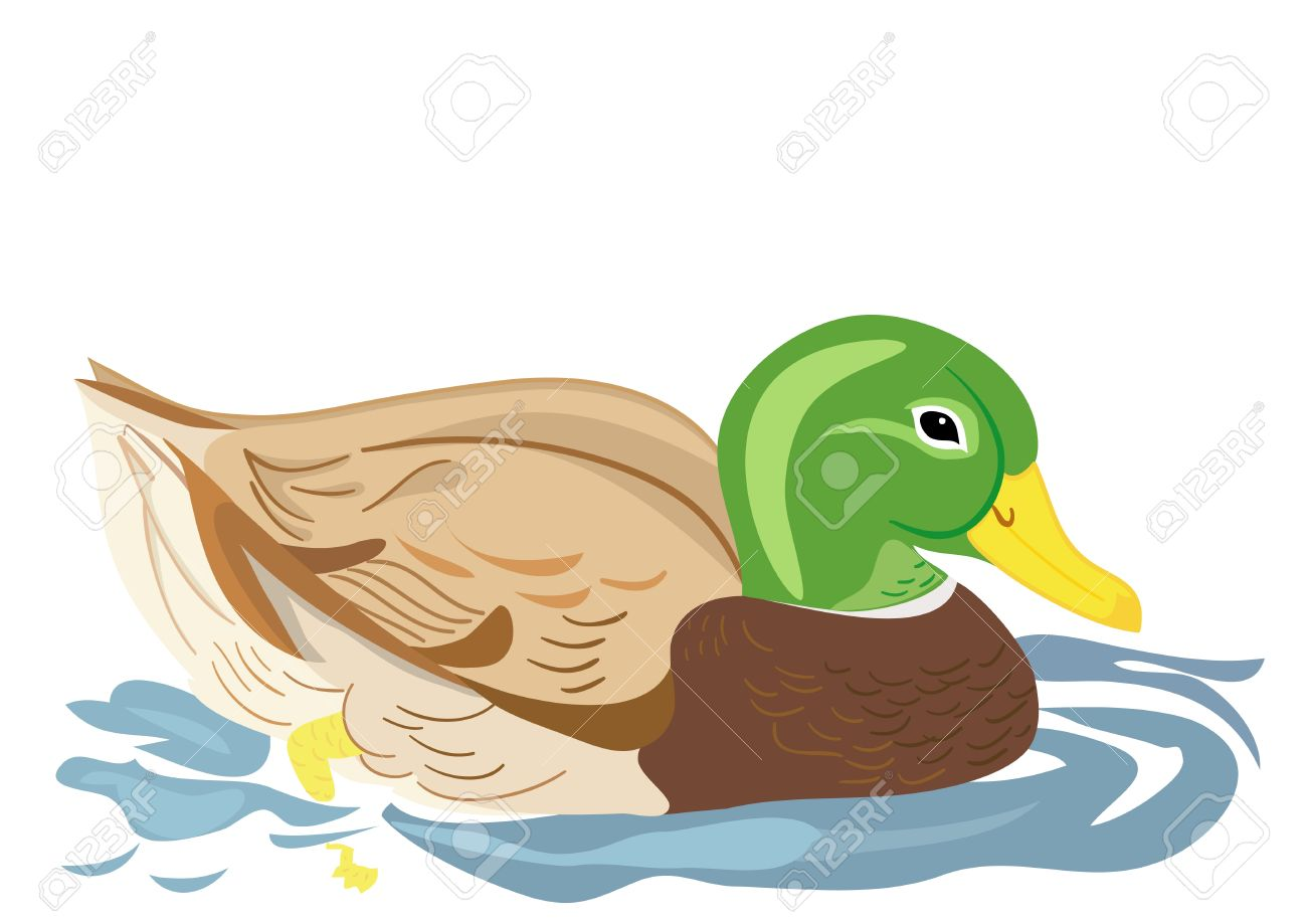 Duck Swimming In Water Clipart.