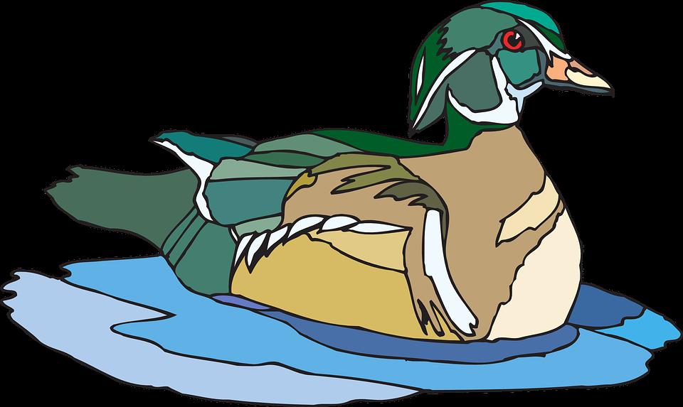 Free vector graphic: Water, Brown, Green, Bird, Duck.