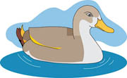 duck in the pond clipart #11