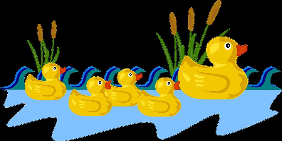 Baby, Ducks.