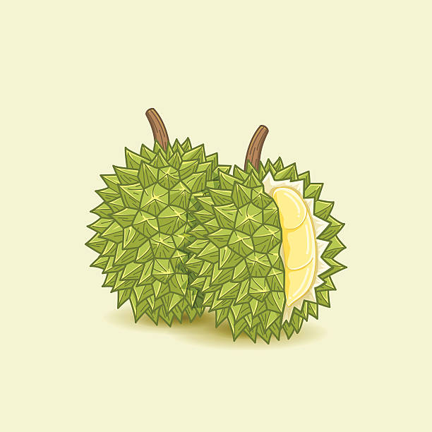 Best Durian Illustrations, Royalty.