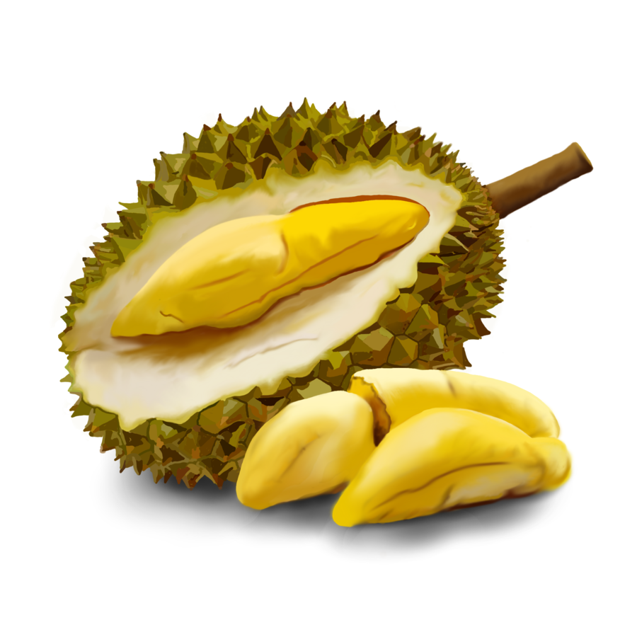 Durian Clipart for printable to.