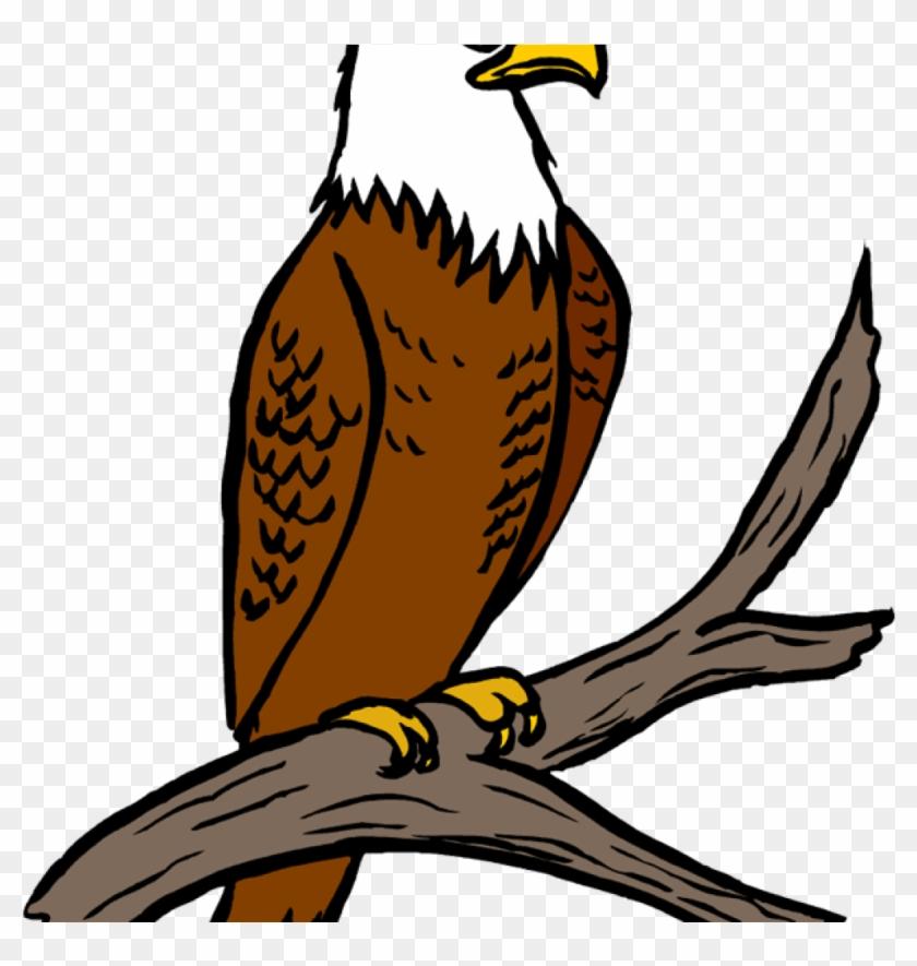 Free Eagle Clipart Eagle Feather Clipart.