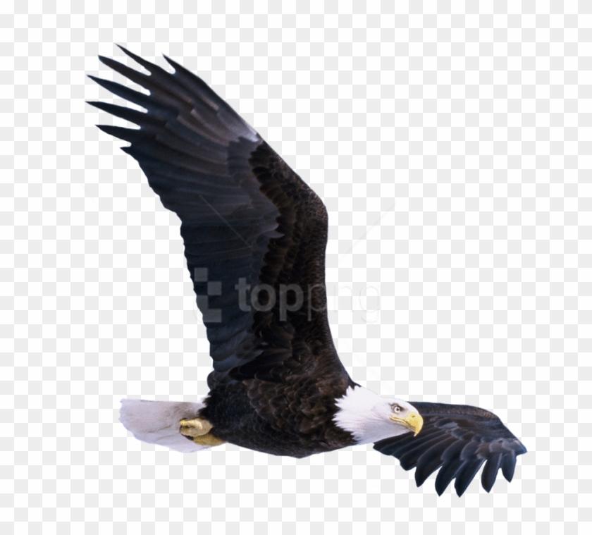 Free Png Download Bald Eagle Flying Png Images Background.