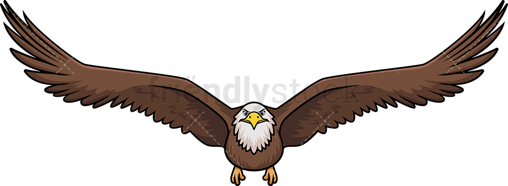 Front View Bald Eagle Flying.