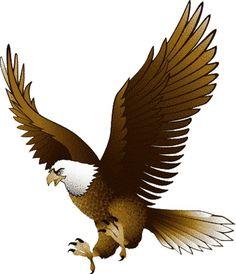 1317 Bald Eagle free clipart.
