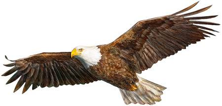 10,184 Eagle Flying Stock Illustrations, Cliparts And Royalty Free.