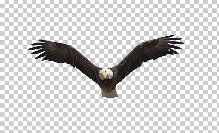 Benton Lake National Wildlife Refuge Bald Eagle Flight Bird PNG.