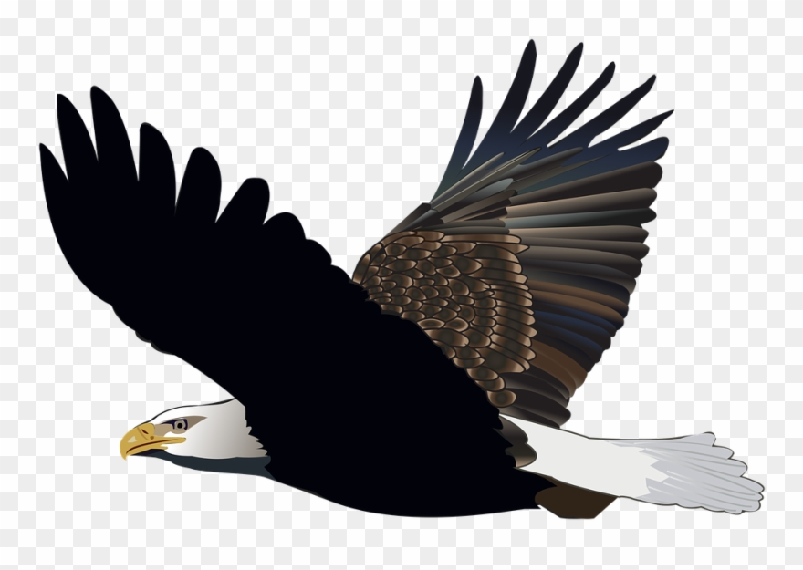 Bird Eagle Flying Feather Nature American Flight.