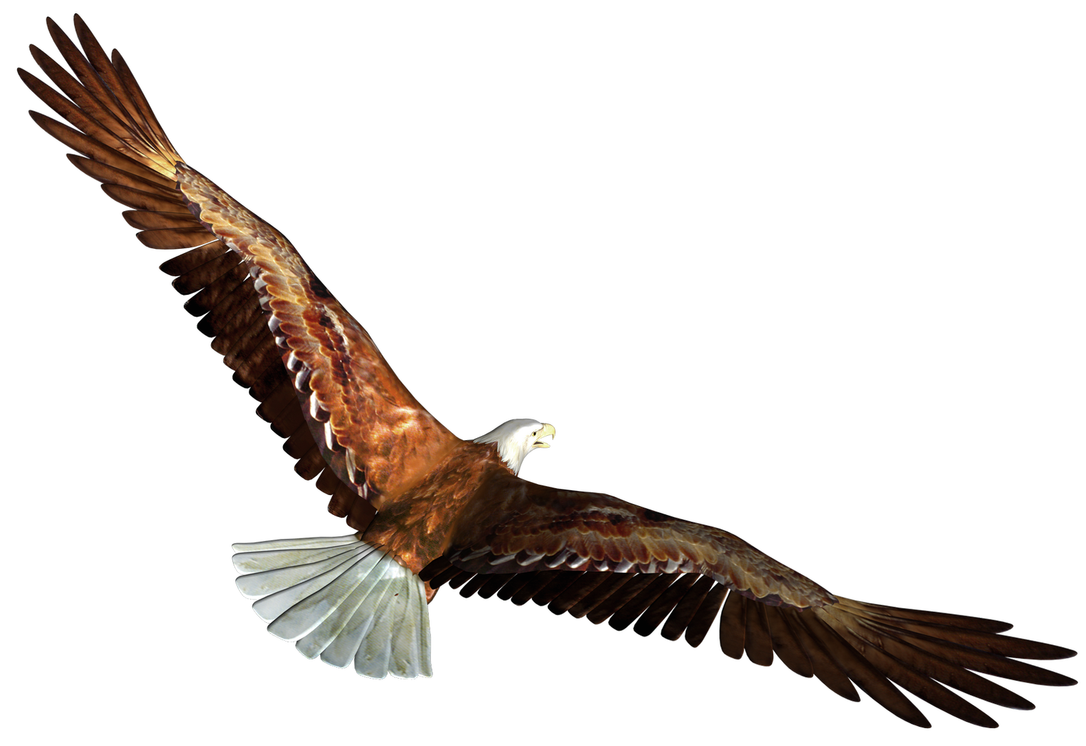 Eagle in Flight Transparent PNG Picture.