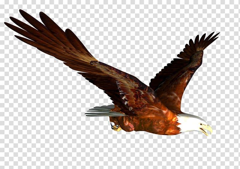 Hawk Mountain Sanctuary Accipitrinae Falconiformes Bird of prey.