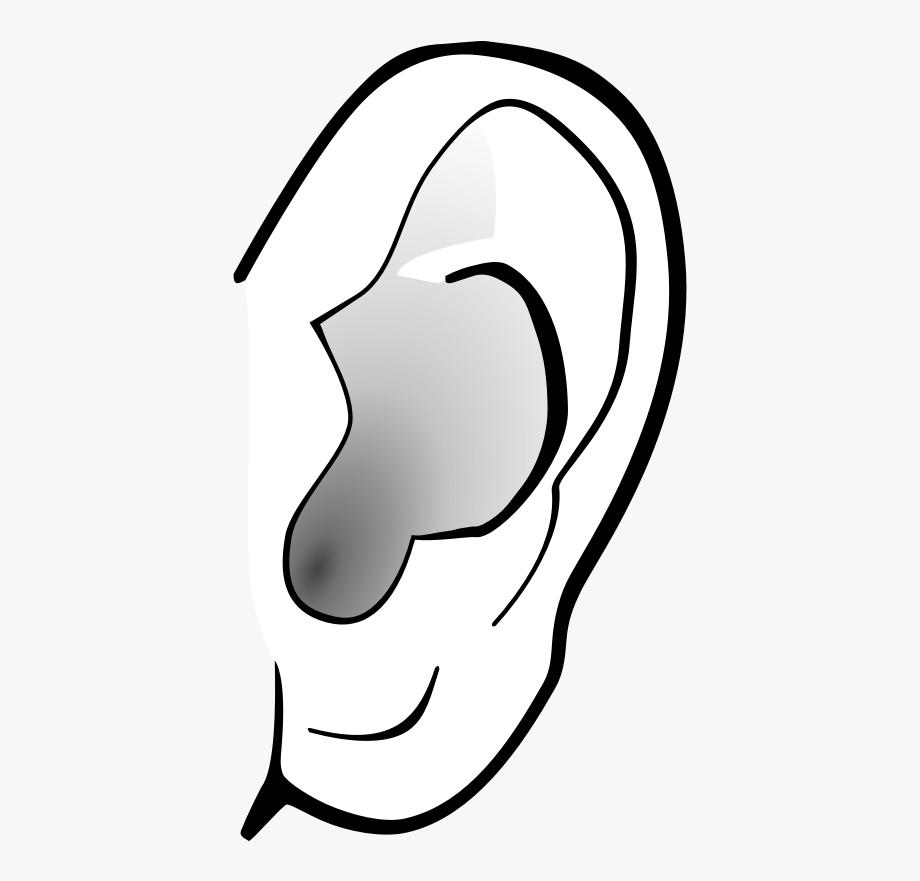 Left Ear Clipart Free Clip Art Image Image.