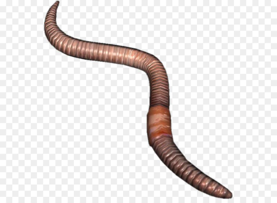 earthworm png clipart Earthworm clipart.