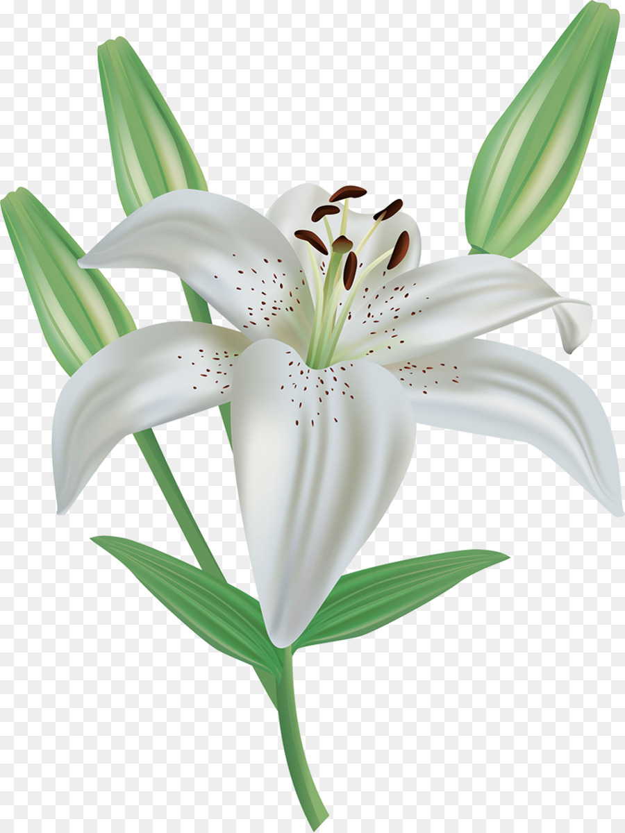 Easter Lily Background.