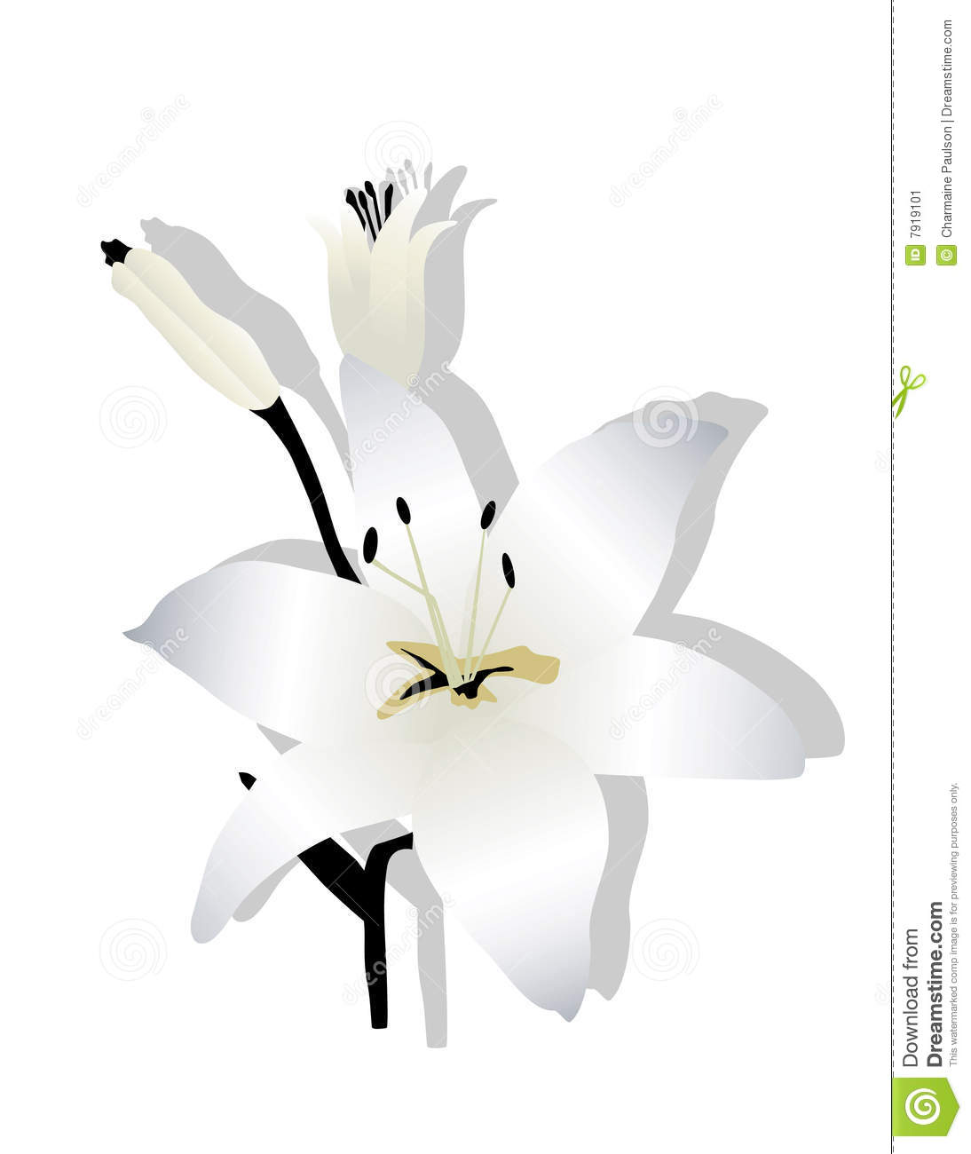 Clipart of easter lily 5 » Clipart Station.