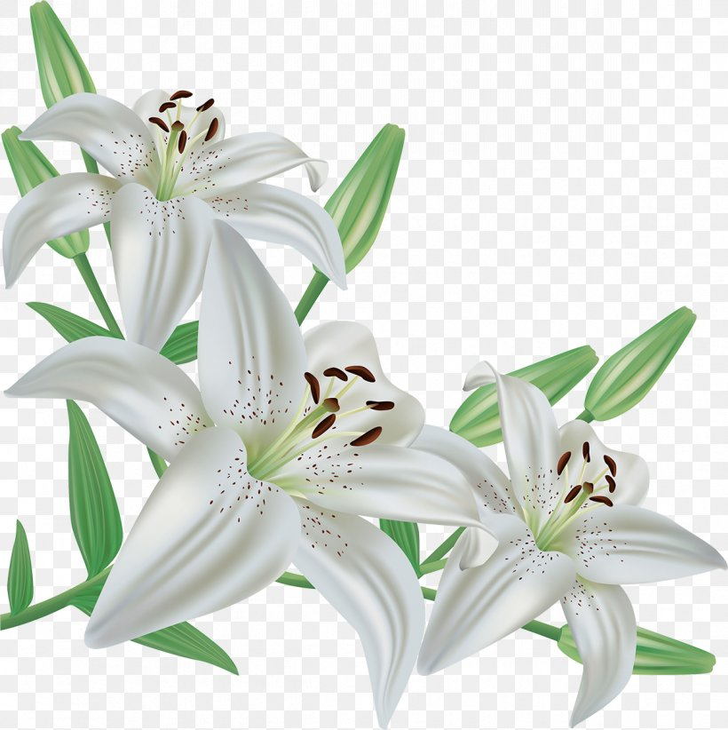 Christian Clip Art Easter Lily Lent, PNG, 1197x1200px.