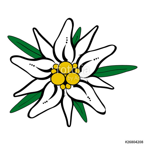 Edelweiss Drawing at GetDrawings.com.