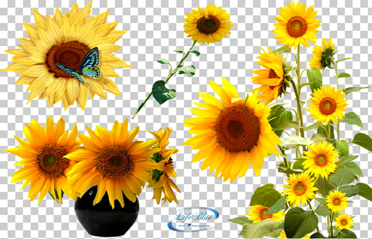 Texture mapping Adobe After Effects , Sunflower Latest.