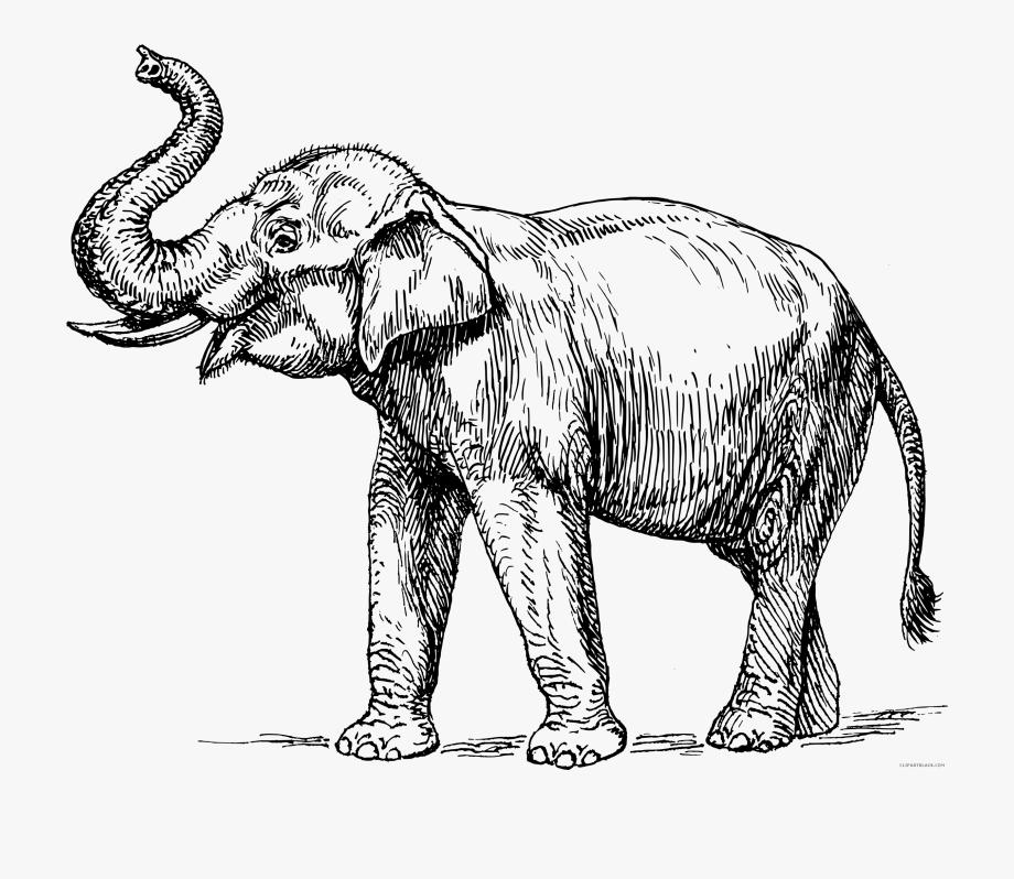Indian Elephant Page Of Clipartblack Com Animal.