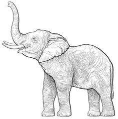 17 Best images about * Elephant Silhouettes, Vectors, Clipart, Svg.