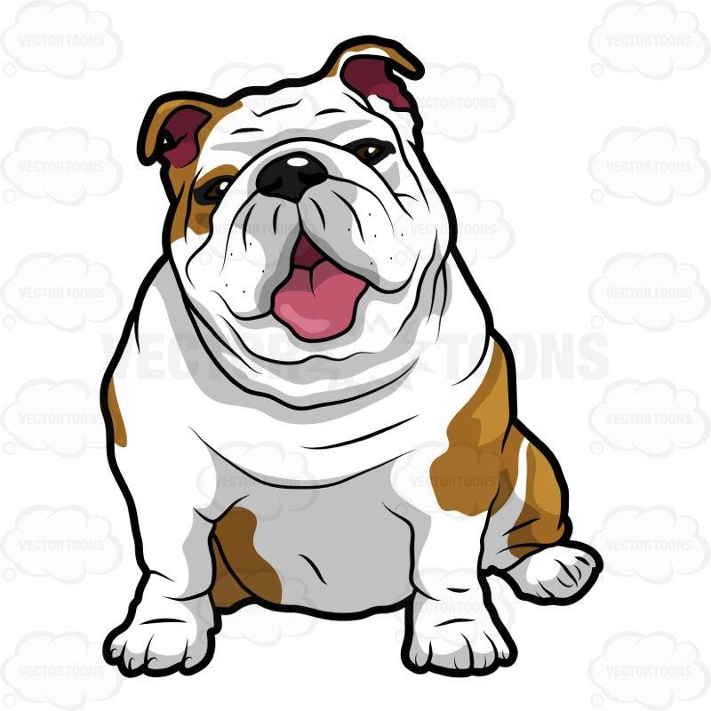 Vector cartoon Wrinkly English Bulldog Sitting With Its.