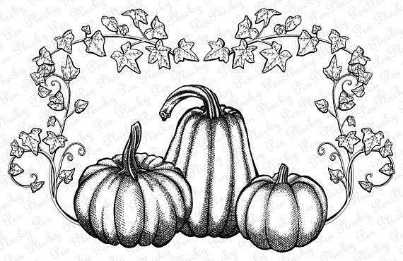 Fall Pumpkin Clipart. Instant Download. Pen & Ink.