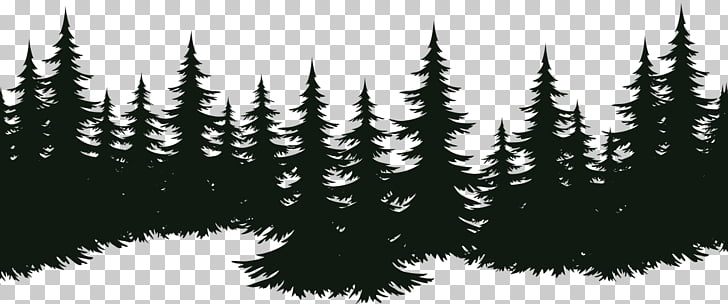 Spruce Fir Tree Pine Evergreen, tree, silhouette photography.