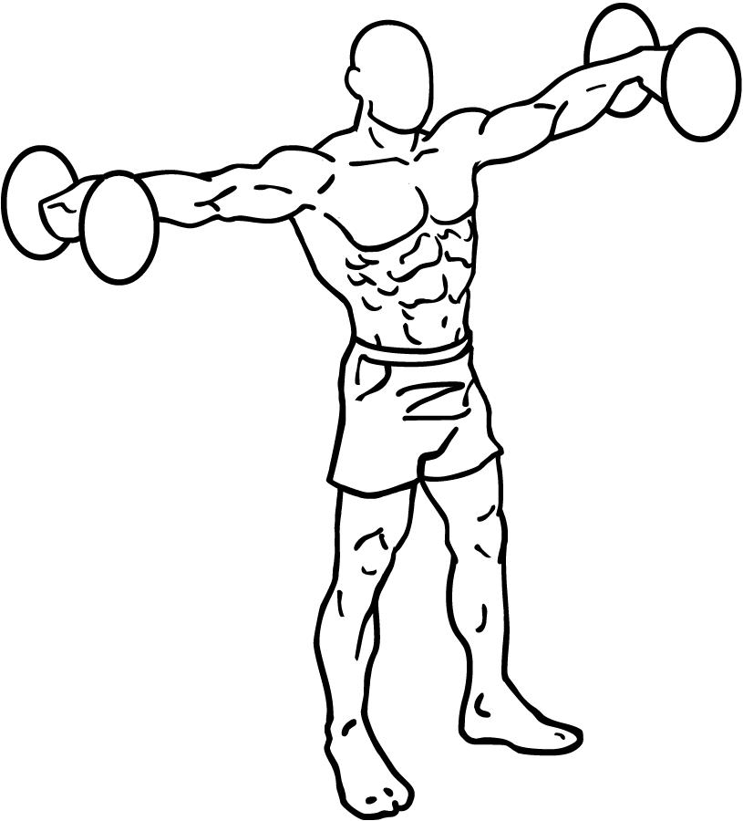 Arm Bones Diagram.