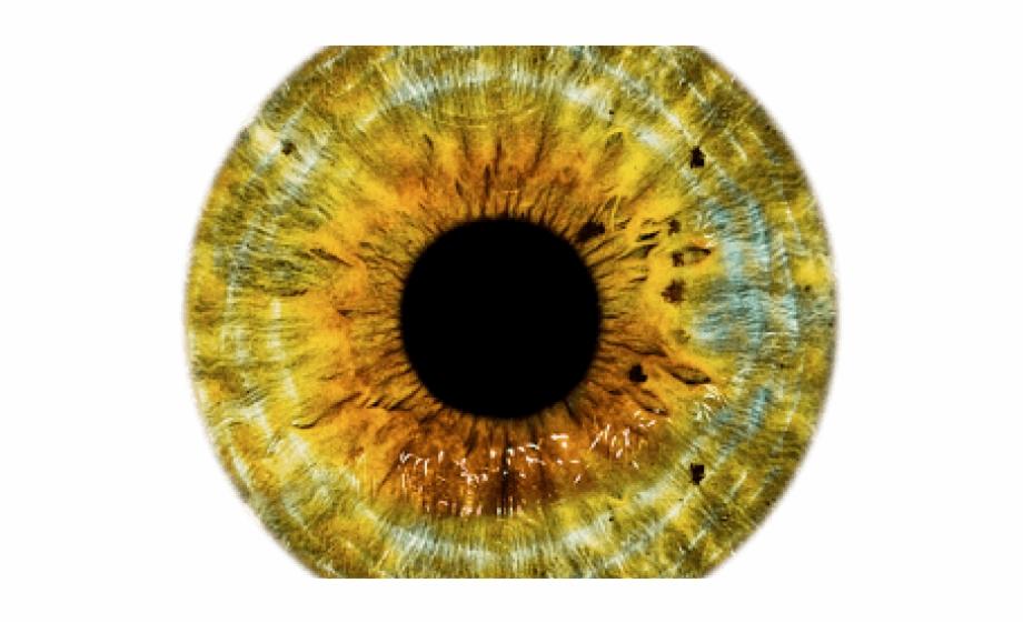Brown Eyes Clipart Yellow Eye Gold Eye Lens.