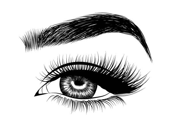 Best Eyebrows Illustrations, Royalty.