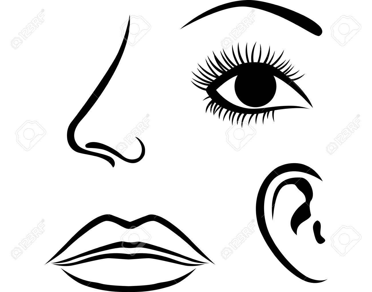 Eyes, nose, lips and ear icon.